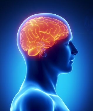 Exercise and the brain   Hillcliff Personal Training North London - Barnet